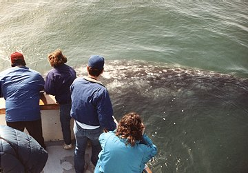 Whale Watch 1